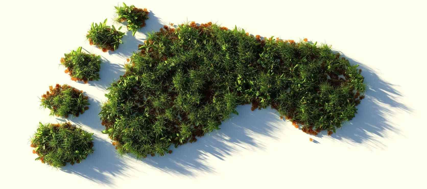 Grüner Fußabdruck © pixabay, CoLiN00B